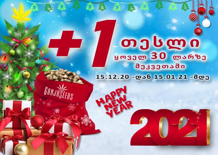 ახალი წელი მთელი თვის მანძილზე GanjaSeeds -ზე